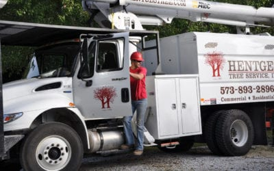 Choosing the Right Tree Service for You