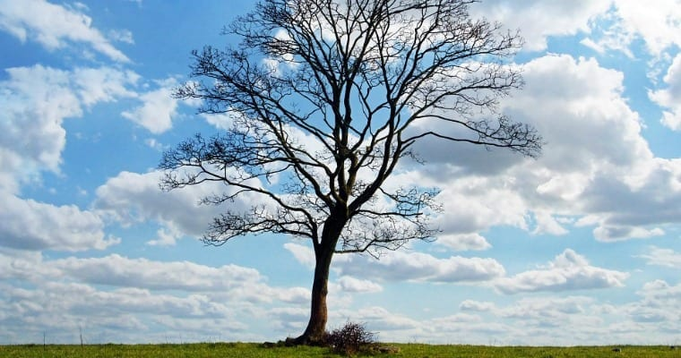3-STEP CHECK: IS YOUR TREE DORMANT OR DEAD?