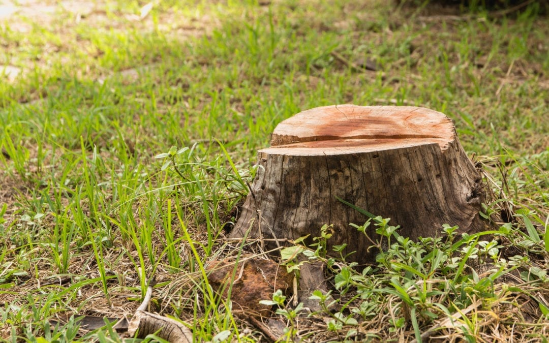 Tree Stump Removal: 4 Things to Consider