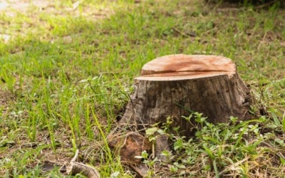 Tree stump in green grass