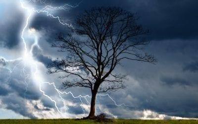 Prepping your trees for Storm Season