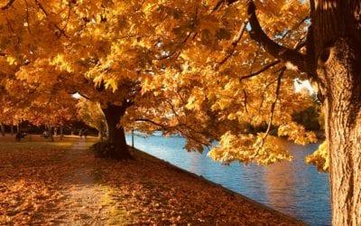 Fall Tree Checklist